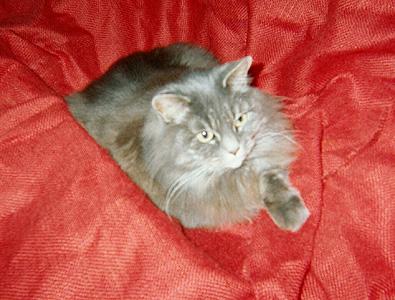 her highness, February 2001
